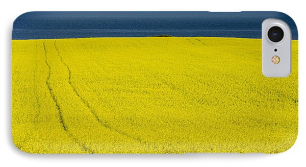 Canola Field, Guernsey Cove, Prince IPhone Case by John Sylvester