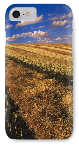 Canola Field, Tiger Hills, Manitoba Phone Case by Dave Reede