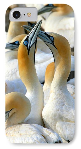 Cape Gannet Courtship Phone Case by Bruce J Robinson