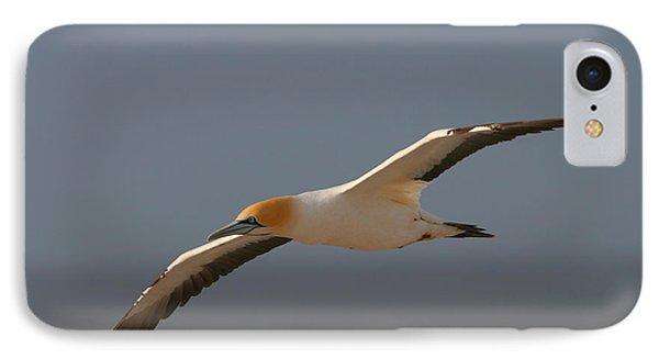 Cape Gannet In Flight Phone Case by Bruce J Robinson