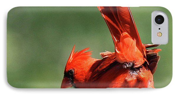 Cardinal-a Picture Is Worth A Thousand Words IPhone Case by Roena King
