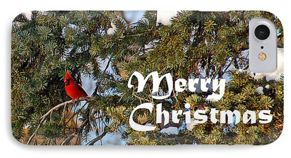 Cardinal Christmas Card Phone Case by Aimee L Maher Photography and Art Visit ALMGallerydotcom
