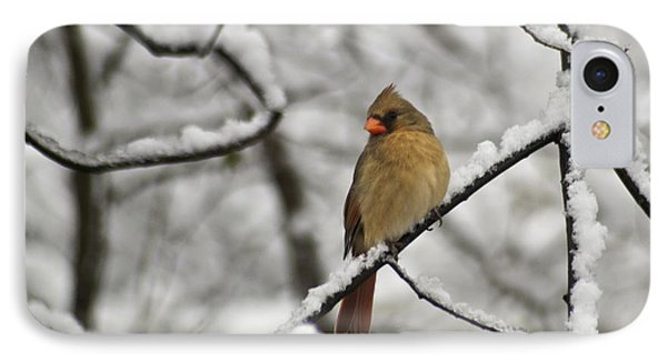 Cardinal Female 3652 Phone Case by Michael Peychich
