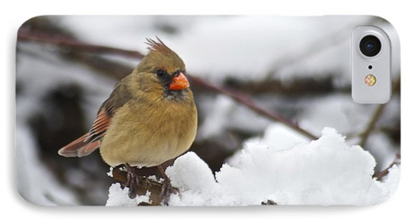 Cardinal Female 3679 Phone Case by Michael Peychich