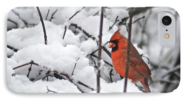 Cardinal Male 3669 Phone Case by Michael Peychich