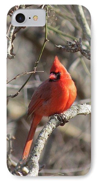 Cardinal Redbird IPhone Case by Rebecca Overton