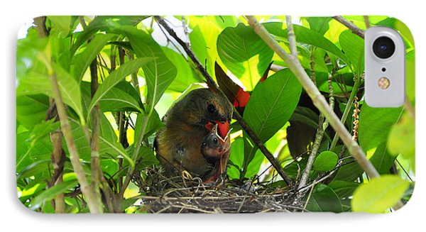 Cardinals Caterpillars IPhone Case by Al Powell Photography USA