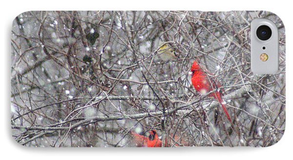 Cardinals In The Snow IPhone Case by Rick Friedle