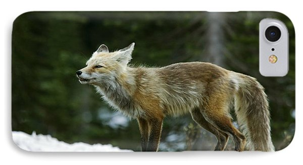 Cascade Red Fox Phone Case by Bob Gibbons