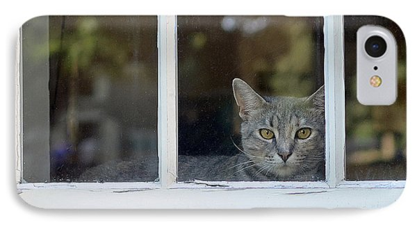 Cat In The Window Phone Case by Lisa Phillips