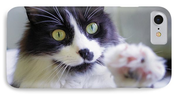 Cat Reaches For Camera Phone Case by Lori Coleman