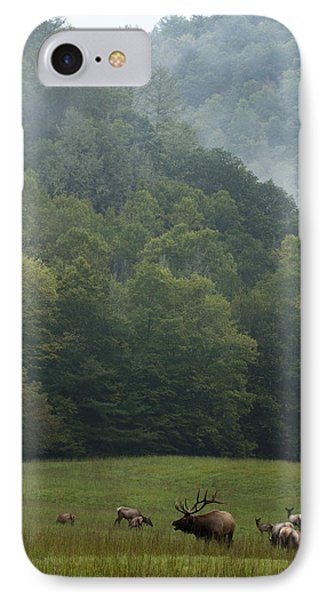 Cataloochee Elk IPhone Case by Carrie Cranwill