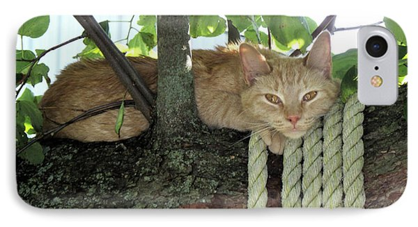 IPhone Case featuring the photograph Catnap Time by Thomas Woolworth