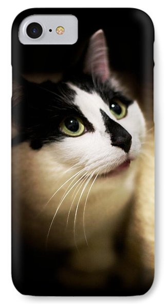 Catsablanca IPhone Case by JM Photography