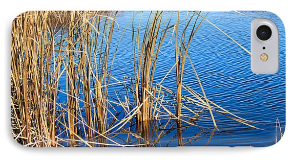Cattail Reeds Phone Case by Ms Judi
