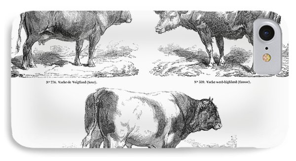 Cattle Breeds, 1856 Phone Case by Granger