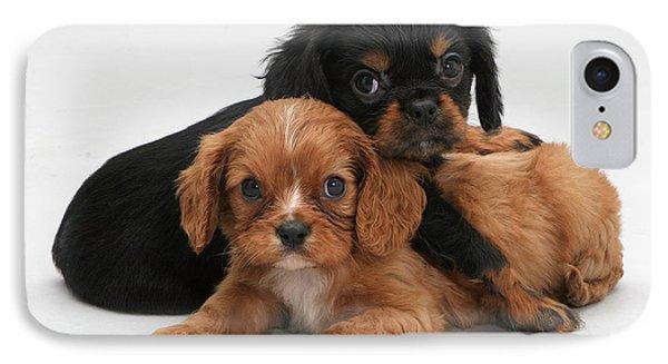 Cavalier King Charles Spaniel Puppies Phone Case by Jane Burton