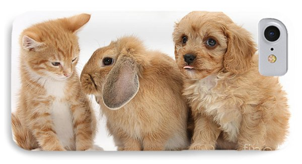 Cavapoo Pup, Rabbit And Ginger Kitten Phone Case by Mark Taylor