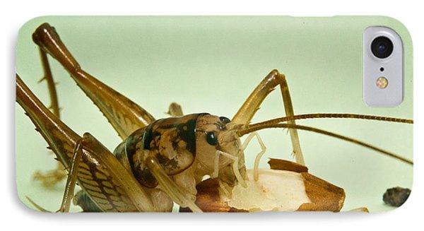 Cave Cricket Feeding On Almond 8 Phone Case by Douglas Barnett