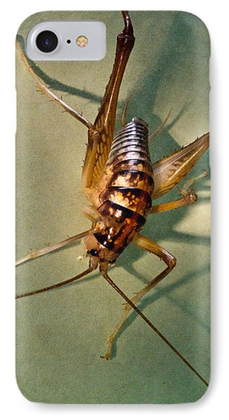 Cave Cricket In Shadow 1 Phone Case by Douglas Barnett