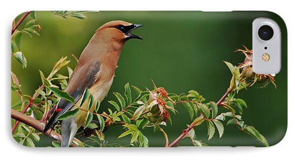 Cedar Waxwing IPhone Case by Jim Boardman