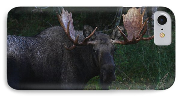IPhone Case featuring the photograph Checking You Out by Doug Lloyd