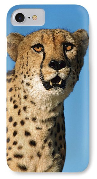 Cheetah Acinonyx Jubatus Portrait Phone Case by Ingo Arndt