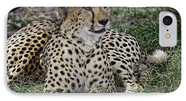Cheetah Alert IPhone Case by Perla Copernik