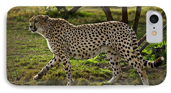 Cheetah  IPhone Case by Garry Gay