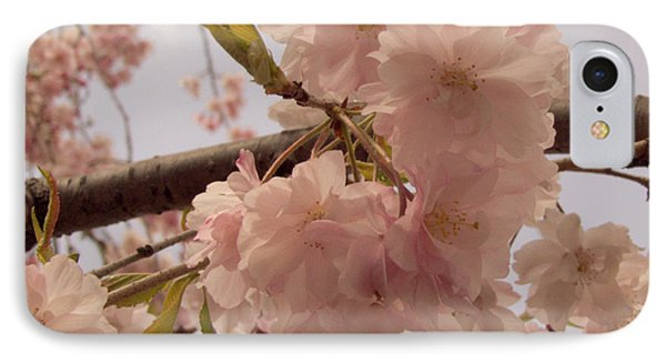 Cherry Blossom 2 IPhone Case by Andrea Anderegg