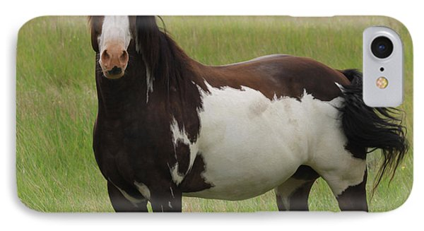 Chestnut Overo Paint Stallion IPhone Case by Karon Melillo DeVega