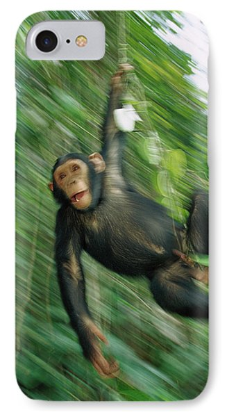 Chimpanzee Pan Troglodytes Juvenile Phone Case by Cyril Ruoso