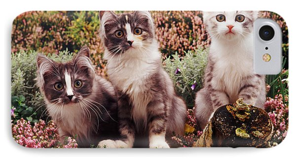 Chinchilla-cross Kittens Phone Case by Jane Burton