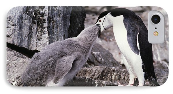 Chinstrap Penguin Feeding Chick Phone Case by Doug Allan