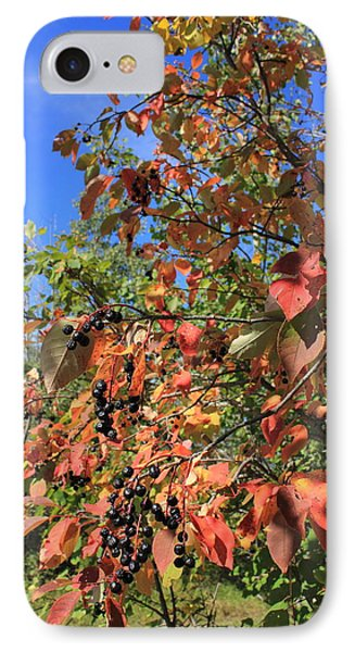 Chokecherry Tree IPhone Case by Jim Sauchyn