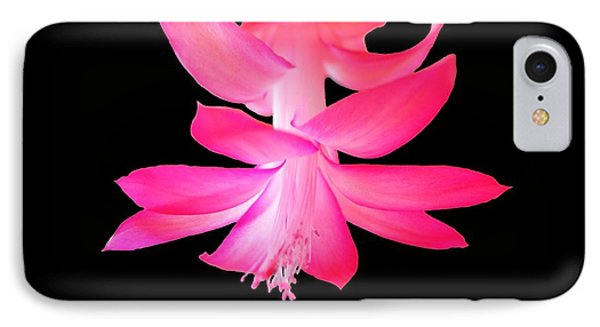 Christmas Cactus IPhone Case by Steven Clipperton