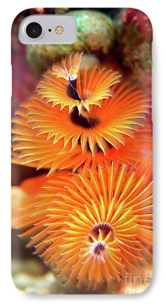 Christmas Tree Worm IPhone Case