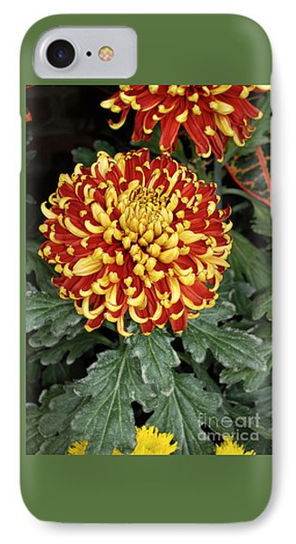 IPhone Case featuring the photograph Chrysanthemum by Eva Kaufman