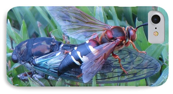 Cicada Killer IPhone Case by John Crothers