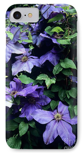 Clematis 'elsa Spath' Flowers Phone Case by Adrian Thomas