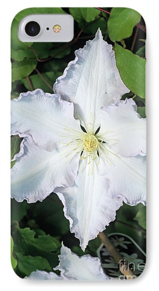 Clematis 'gladys Picard' Flower Phone Case by Adrian Thomas
