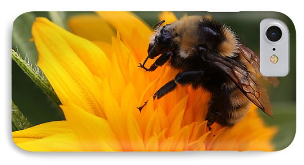 Close-up Bee On Sunflower IPhone Case by Marjorie Imbeau