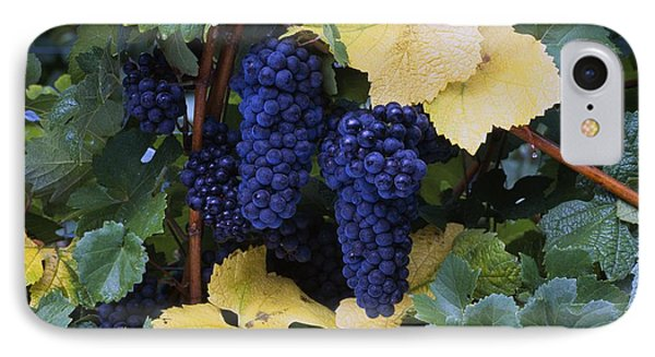 Close-up Of Ripe, Wine Grapes And Leaves Phone Case by Natural Selection Craig Tuttle