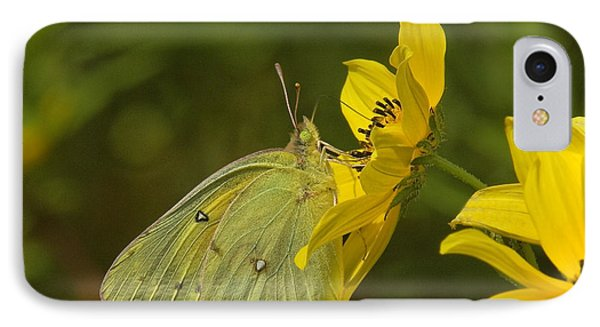 Clouded Sulphur Butterfly Din099 IPhone Case by Gerry Gantt