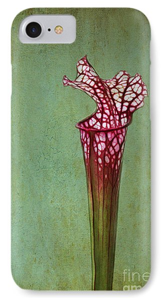 Cobra Lily IPhone Case by Judi Bagwell