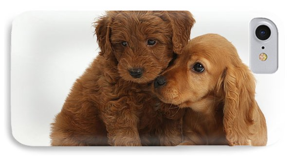 Cocker Spaniel Puppy And Goldendoodle IPhone Case by Mark Taylor