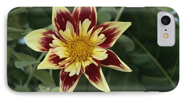 Collerette Dahlia Phone Case by Archie Young