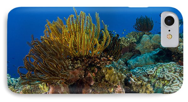 Colony Of Crinoids, Papua New Guinea Phone Case by Steve Jones