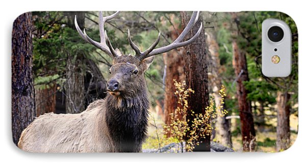 IPhone Case featuring the photograph Colorado Elk by Nava Thompson