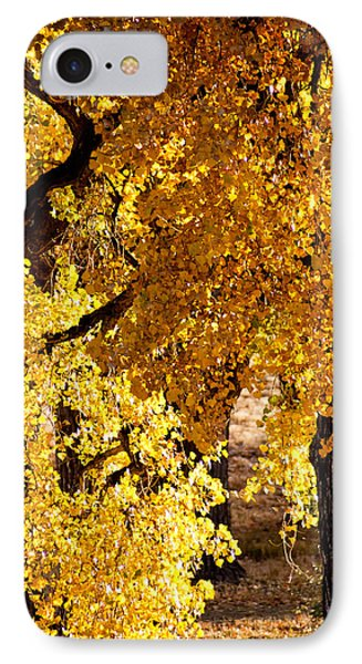 IPhone Case featuring the photograph Colorado Gold by Colleen Coccia